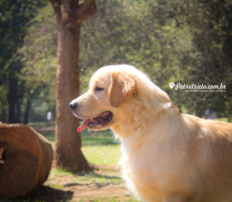 Golden Retriever e Terra Nova